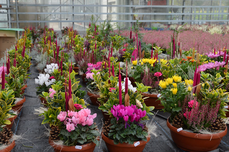 Blumen Posch
